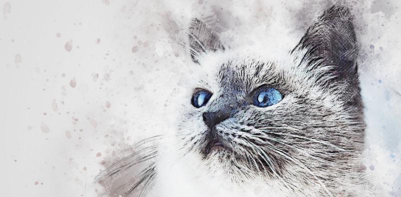 що означає кішка в домі