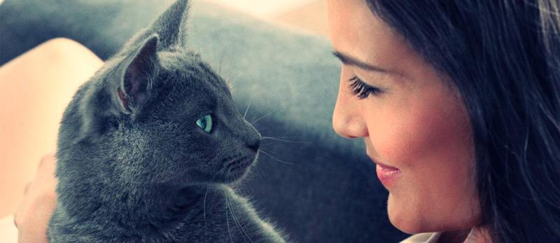 чому не можна дивитися котові в очі